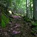 Bergweg oberhalb Gündlischwand