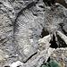 """Deswegen heisst es """"Jurassic Coast"""": In den Felsabbruechen findet man immer noch viele Fossilien, da die andauernde Erosion staendig neue Felsbrocken freigibt."""