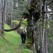 """Nicht jeder kommt durch das """"Baum-Henkerbeil"""" heil durch..."""