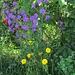 Ausgewilderte Gartenpflanzen.