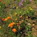 Ausgewilderte Gartenpflanzen. Trotzdem schön.