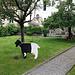 ... selbst in Chur gibt es meine Lieblingsziege - die Walliser Schwarzhalszege