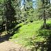 nun auf breitem Weg gesäumt von Baum und Strauch entlang des Grats zunächst zum Aussichtspunkt Ganzaleita