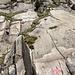 """Hier ist der neue Klettersteig zu erkennen, oberhalb des Treppenschachts zu den Gleisen. Vielleicht führt er zum """"Urnerloch"""", welches auf der Karte etwas oberhalb eingezeichnet ist."""