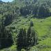 Sommerrodelbahn Alpsee Bergwelt