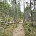 Es geht durch den Urwald