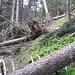 tronchi sul sentiero