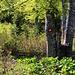 Der Weg auf den Maglić ist hervorragend markiert. Die zeichen sind wie in allen Ländern Ex-Jugoslawiens weisse Punkte die rot umrundet sind. Daneben gibt es seltener auch blaue Striche und rote Sterne als Markierungen denen man aber ebenfalls folgt.