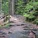 steiniger Waldpfad von Josefův Důl hinauf zum Isergebirgskamm