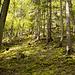 Wunderschöner, wilder Waldabschnitt bei La Combe