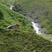 Las Eras 2117 m dans le Val Sampuoir