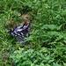 Petit oiseau immobile dans l'herbe. J'espère qu'il ira mieux
