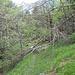 Altri alberi lungo il sentiero.
