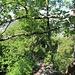 Kleiner Retourblick, hier sind gut die auf dem Grat häufig vertretenen Flaumeichen zu sehen.