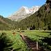 Mutterkuh-Herde auf der Alp Gspohn