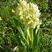 Orchideen, so weit das Auge sieht.