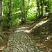 Aufstieg durch den Wald, mit interessantem Bodenbelag