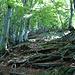 dann wieder im Wald unterwegs