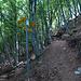 in einer Kehre erreicht man dann den einfachen und ausgeschilderten Weg zum Boglia
