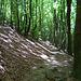 von der Alpe Brolla bis Brè fast nur im Wald unterwegs