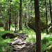 ... und schon unten im Wald die ersten großen Felsbrocken