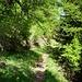 Letze Waldpassage auf fast 2000m.