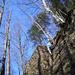 Die obere Wandstufe von Brandegg West: Nagelfluh, Baumgeometrie und blauer Februarhimmel