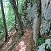 und wieder hinein in den Wald an eindrücklichen Felsen entlang