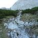 durch diese Latschengasse erreicht man den Grat der die NW-Wand von der Westflanke trennt
