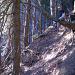 Freischwebender Stamm-Sessel (Foto [U sglider])