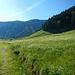 Die Sattel Alpe