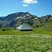 Die Altenhof Alpe vor dem Hohen Freschen.