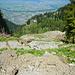 Der gewaltige Bergrutsch unterhalb der Briedler Alpe. Der ehemalige Fahrweg zur Briedler Alpe ist zwar noch intakt, er ist nur nicht mehr an der Stelle, wo er eigentlich sein sollte.