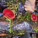 Pilze im Märchenwald (Foto [U sglider])