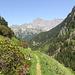 Der Pfad ist von Alpenrosen flankiert. Im Hintergrund die Gadmerflue.