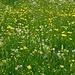 aparte Blumenwiese ...