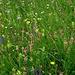 eine, für heute, letzte, farbige, üppige Blumenwiese ...