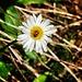 Berg-Fauna 1 (inkl. Flora)