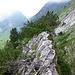 Seealpseeturm: Gipfelgrat mit einer grossen Legföhre als Gipfelpunkt
