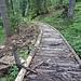 Stellenweise gibt es Holzstege durch den Schräwald hinunter ...