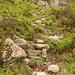 im Abstieg auf dem «stotzigen Weg» von der Windegghütte zu Bosslis Stein