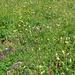 Blumenwiesen par excellence
