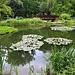 Am Abreisetag machte ich den lohnenswerte Ausflug in den Botanischen Garten Zagrebs der auf Kroatisch Botanički vrt heisst. Wegen dem sehr artenreichen Arboretum und den Seen ist er ein Besuch zu empfehen. Auch wenn man kein Botaniker ist findet man im Stadttrubel hier Ruhe.