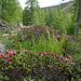Abstieg zwischen Fanezmeder und Oberalp
