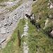 Steckenberg: Zugang zur Südseite - die Überreste eines Viehweges