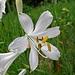 andere blühen noch schön