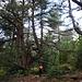 Im schönen Kiefernwald