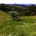 Wilderness bucolique des Vosges du sud