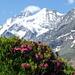 Kontaste unserer Alpen