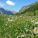 Prati in fiore in Val Fex